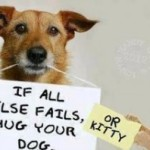 Happening Health Blog: The Positive Effects of Pets